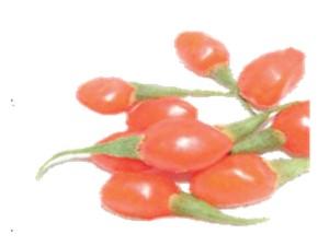 Goji Berry -- 6.10.13