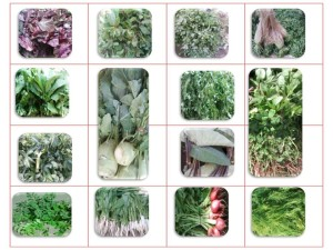 Green Leafy Vegetable List -- 7.06.15