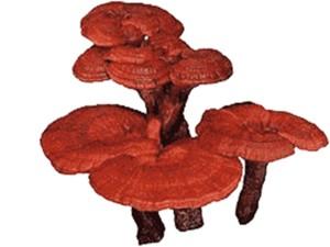Reishi`Mushroom`Pic`--`9.11.15